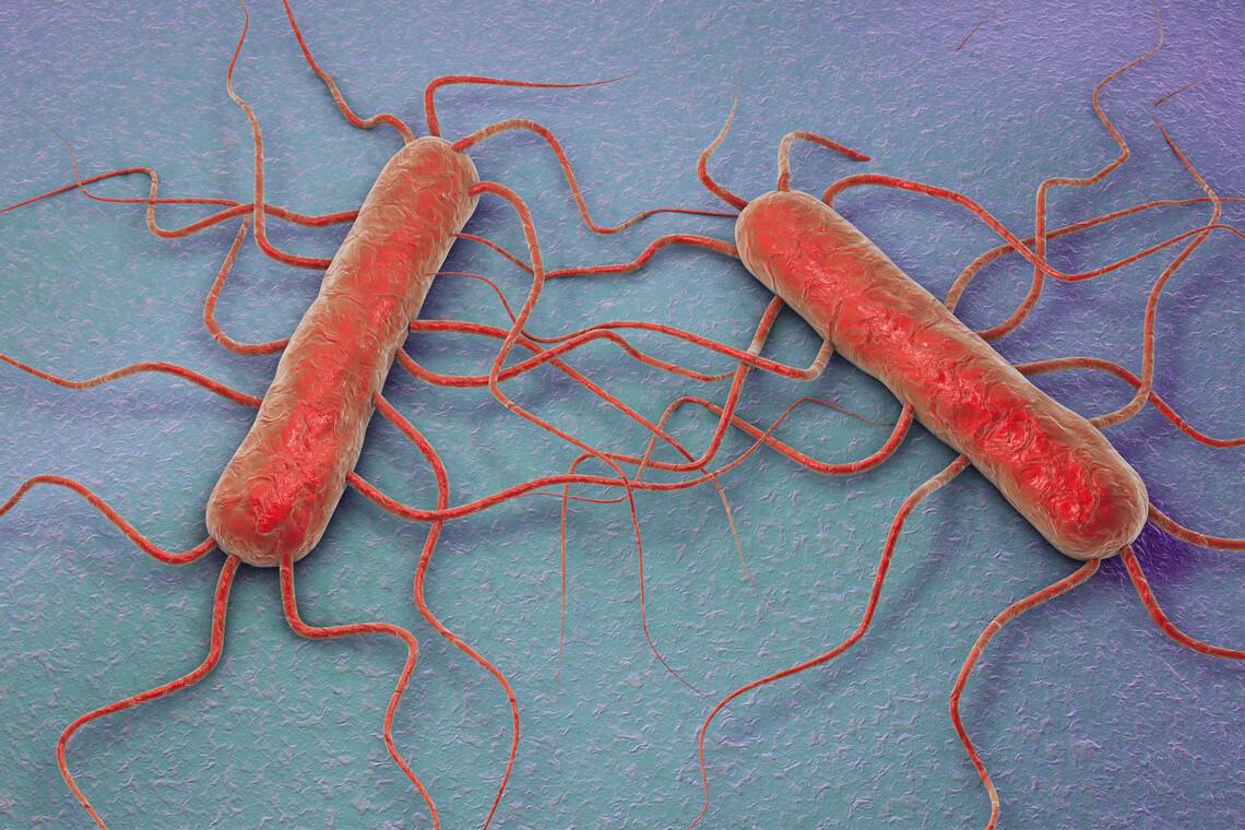 KIN Expert Intensiv Seminar – Listerien sicher vermeiden